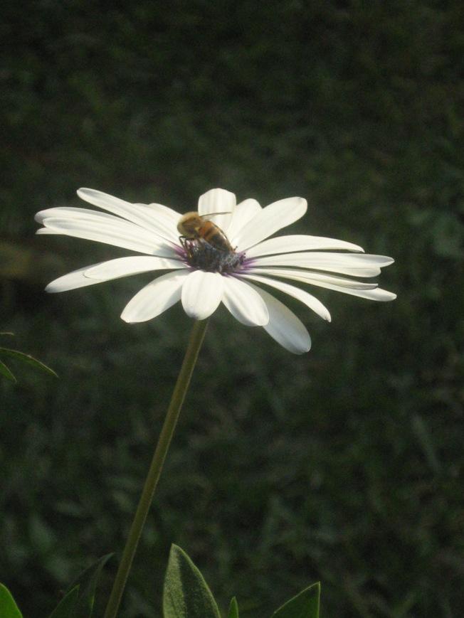 Por el polen