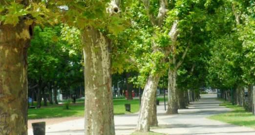 imagen: celene a. (Bosques de Palermos - Argentina(